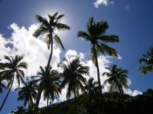 Palmeiras maravilhosas na frente de um céu azul fotografia de stock