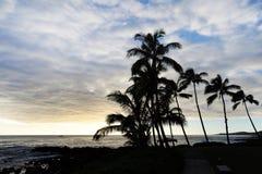 Palmeiras mostradas em silhueta pelo mar Fotos de Stock