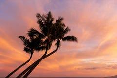 Palmeiras mostradas em silhueta em um por do sol tropical de Maui Foto de Stock Royalty Free
