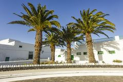 Palmeiras na frente das casas brancas do estilo amarelo típico em Teguise, Ilhas Canárias, Espanha imagem de stock