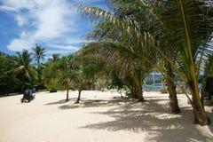 Palmeiras na praia Imagem de Stock