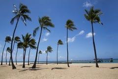 Palmeiras na praia fotografia de stock