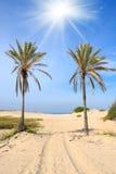 Palmeiras na praia Imagens de Stock Royalty Free
