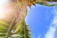 Palmeiras na praia Fotos de Stock