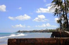 Palmeiras na praia Fotografia de Stock Royalty Free