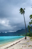 Palmeiras na praia de Temae na ilha de Moorea Foto de Stock