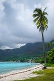 Palmeiras na praia de Temae na ilha de Moorea Imagens de Stock Royalty Free