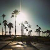 Palmeiras na praia de Veneza fotografia de stock