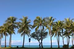 Palmeiras na praia de Waikiki, Havaí fotos de stock royalty free