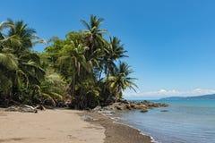 Palmeiras na praia em Drake Bay, Costa Rica Imagens de Stock