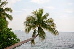 Palmeiras na praia na ilha Foto de Stock