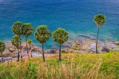 Palmeiras na praia na ilha de Phuket Fotografia de Stock