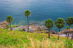Palmeiras na praia na ilha de Phuket Imagens de Stock