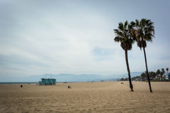 Palmeiras na praia, na praia de Veneza, Los Angeles, Californi Fotos de Stock