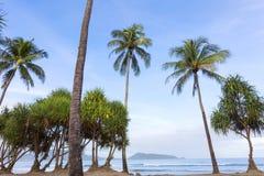 Palmeiras na praia na temporada de verão Imagem de Stock Royalty Free