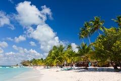 Palmeiras na praia tropical Imagem de Stock