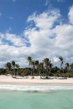 Palmeiras na praia tropical Foto de Stock
