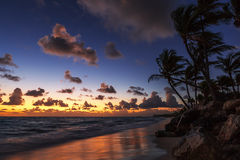 Palmeiras na praia tropical Fotografia de Stock Royalty Free