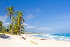 Palmeiras na praia tropical, Bavaro, Punta Cana, dominiquense Imagem de Stock Royalty Free