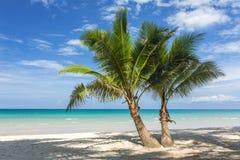 Palmeiras na praia tropical bonita na ilha de Koh Kood Fotos de Stock Royalty Free