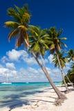 Palmeiras na praia tropical, mar do Cararibe Fotos de Stock