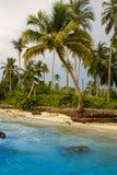 Palmeiras na praia tropical na Colômbia, América Sur Fotografia de Stock Royalty Free