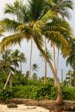 Palmeiras na praia tropical na Colômbia, América Sur Imagens de Stock