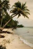 Palmeiras na praia tropical na Colômbia, América Sur Imagem de Stock