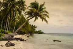 Palmeiras na praia tropical na Colômbia, América Sur Imagem de Stock Royalty Free