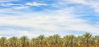 Palmeiras no deserto do Arizona Foto de Stock Royalty Free