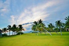 Palmeiras no gramado em um fundo Fotografia de Stock Royalty Free