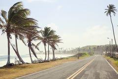 Palmeiras no lado da estrada de San Andres Fotografia de Stock