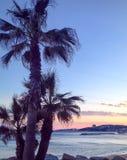 Palmeiras no paraíso do nascer do sol do por do sol fotografia de stock