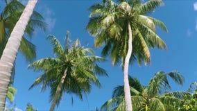 Palmeiras no paraíso - expõe ao sol o brilho através das folhas vídeos de arquivo