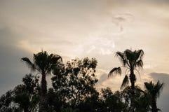 Palmeiras no por do sol imagens de stock