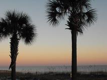 Palmeiras no por do sol, praia alaranjada, Alabama Imagens de Stock Royalty Free