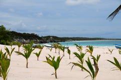 Palmeiras novas na praia Fotografia de Stock Royalty Free