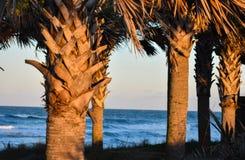 Palmeiras pelas dunas de areia ao longo da costa de praias de Florida na entrada de Ponce e na praia de Ormond, Florida imagens de stock