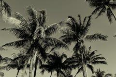 Palmeiras preto e branco do vintage fotos de stock royalty free