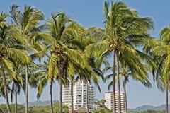 Palmeiras que fronteiam o arranha-céus residencial fotos de stock royalty free