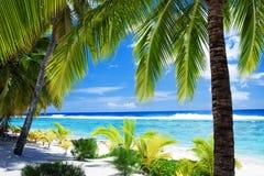 Palmeiras que negligenciam a lagoa e a praia Fotografia de Stock Royalty Free