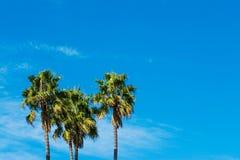 Palmeiras sob um céu azul em Califórnia Imagem de Stock Royalty Free