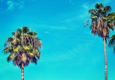 Palmeiras sob um céu azul em Los Angeles Imagens de Stock Royalty Free