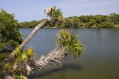 Palmeiras sobre o rio indiano foto de stock