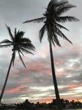 Palmeiras sobre um por do sol em Miami, Florida, EUA Foto de Stock