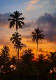 Palmeiras tropicais contra o céu no por do sol imagem de stock