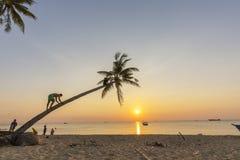 Palmeiras tropicais do por do sol da praia do paraíso Foto de Stock