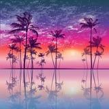 Palmeiras tropicais exóticas no por do sol ou no luar, com nebuloso ilustração stock