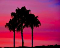 Palmeiras tropicais no por do sol de Silouette Fotos de Stock
