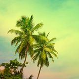 Palmeiras tropicais tonificadas no céu fantástico ensolarado foto de stock
